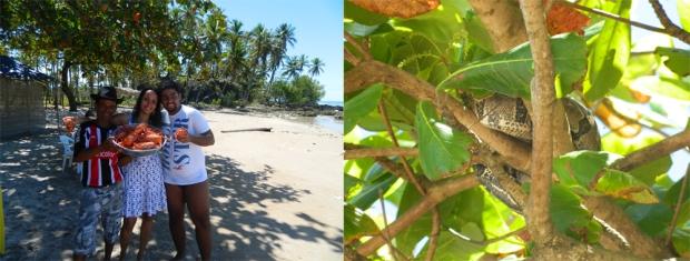 Seu Guido, nós, as lagostas e uma visitante na árvore bem ao lado rs (Boipeba)