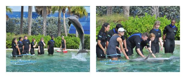 Dolphin Odyssey Experience - Miami Seaquarium