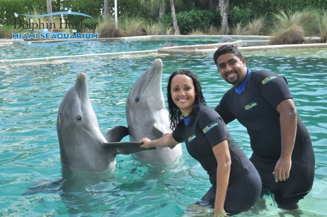 Cumprimentando os golfinhos - Miami Seaquarium