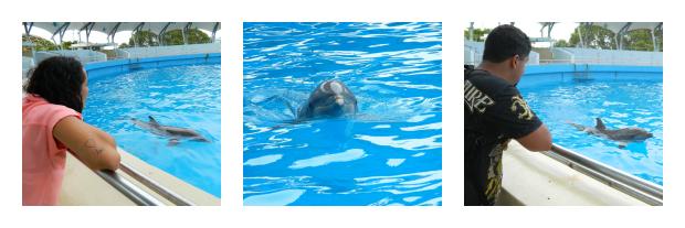 Golfinhos nos recebendo - MIami Seaquarium