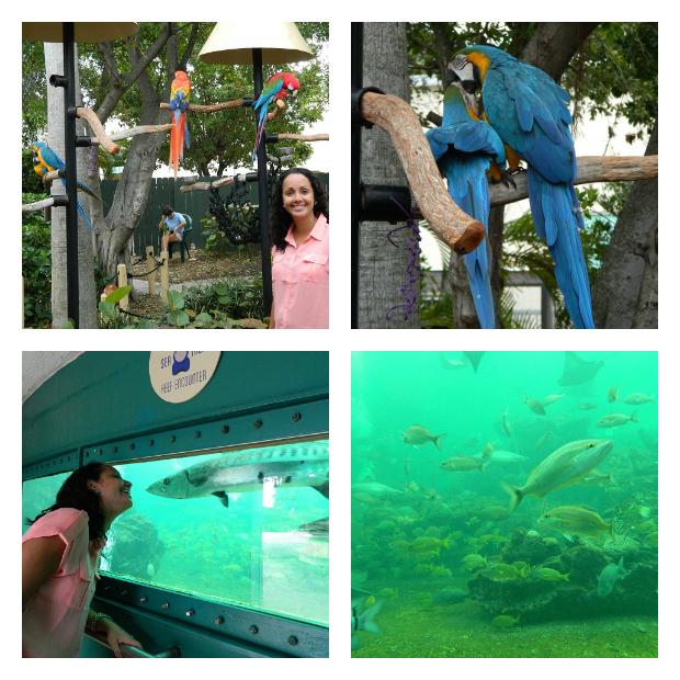 Aquário e aves no Miami Seaquarium