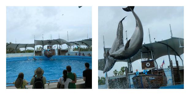 Piruetas dos golfinhos - Miami Seaquarium