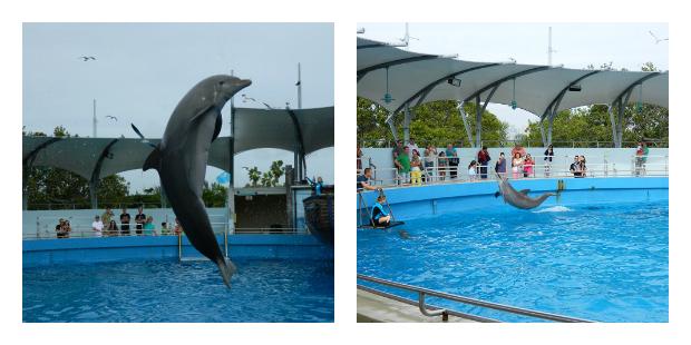 Tem que tomar muito cuidado pra não se molhar - Miami Seaquarium