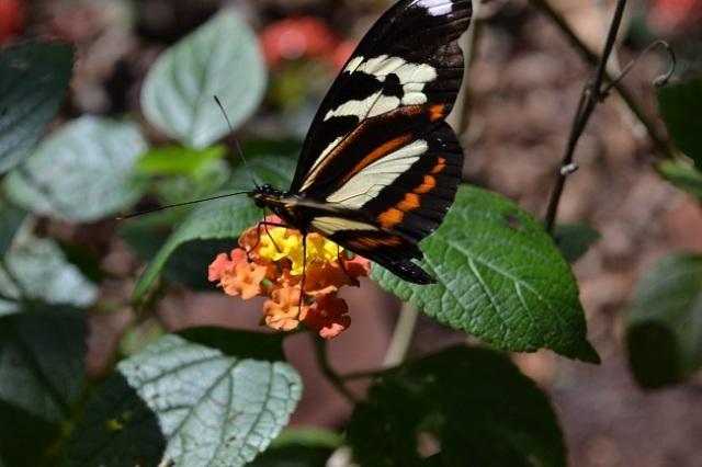 Viveiro das borboletas é muito legal!