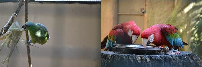 Há uma variedade enorme de pássaros no Parque das Aves