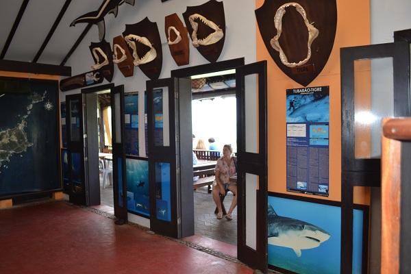 Museu do Tubarão - Fernando de Noronha