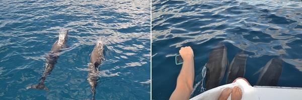 Golfinhos rotadores - Fernando de Noronha
