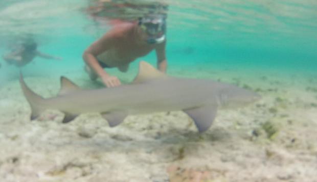 Filhote de tubarão - Atalaia - Fernando de Noronha