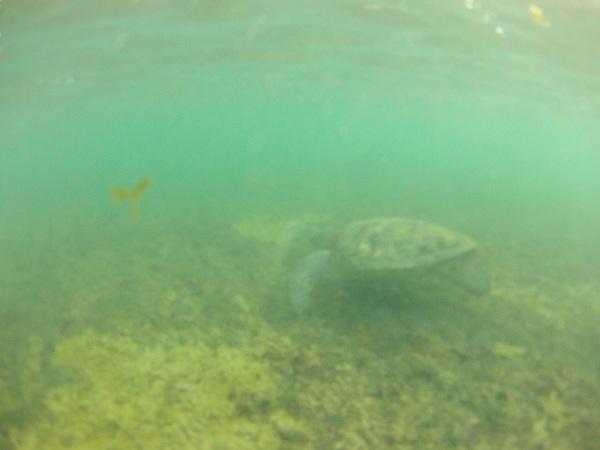 Tartaruga Marinha no Sueste