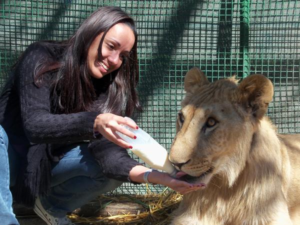 Leão com 11 meses - Zoo Lujan - Argentina, 2010