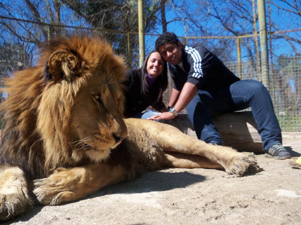 Leão adulto - Zoo Lujan - Argentina, 2010