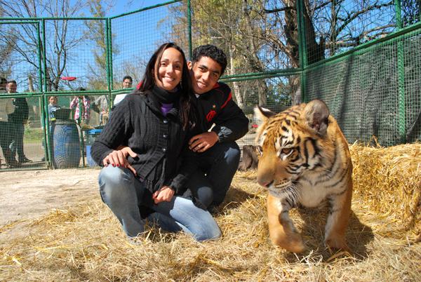 Tigre -  Zoo Lujan - Argentina, 2010