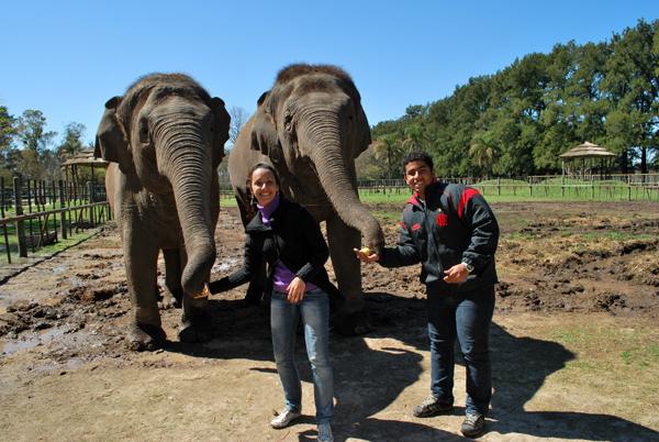 Elefantes - Zoo Lujan - Argentina,2010