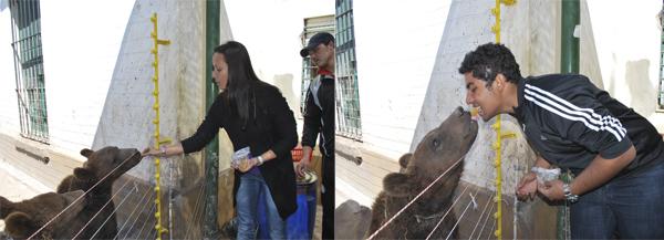 Ursos - Zoo Lujan - Argentina, 2011