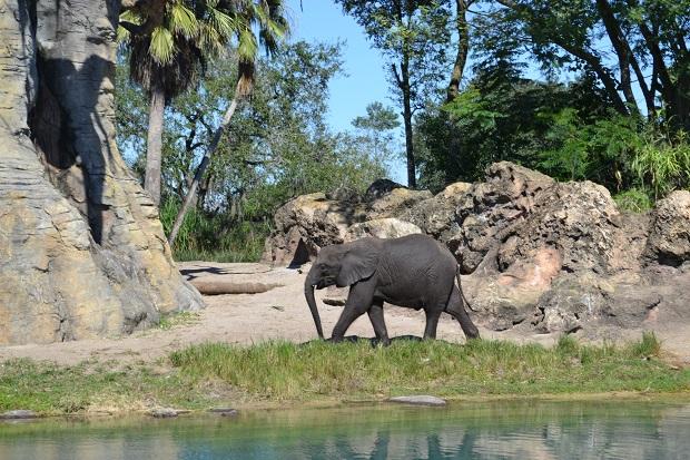 Elefante no Safari