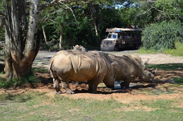 """Vejam lá atrás como é o """"carrinho"""" do Safari"""