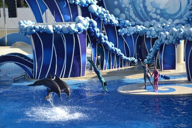 Espetáculo dos golfinhos é mais teatral