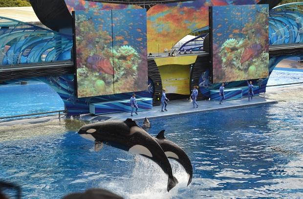 Apresentação das baleias é o ponto alto