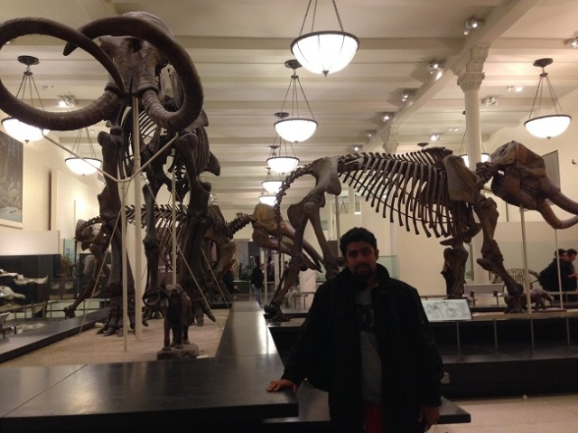 Dinossauros!!!