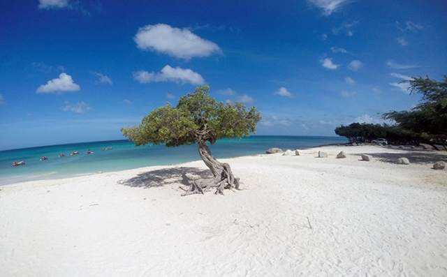 dicas eagle beach aruba