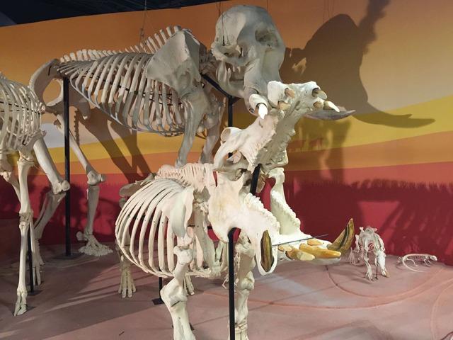 Skeletons Orlando