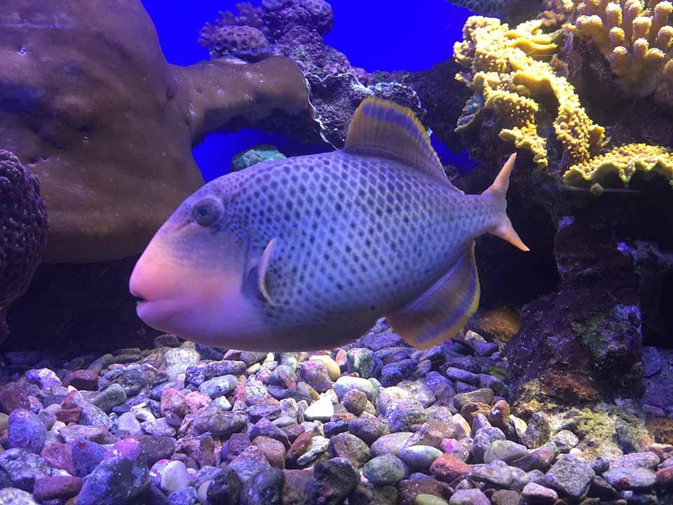 Coral World Underwater Observatory Eilat